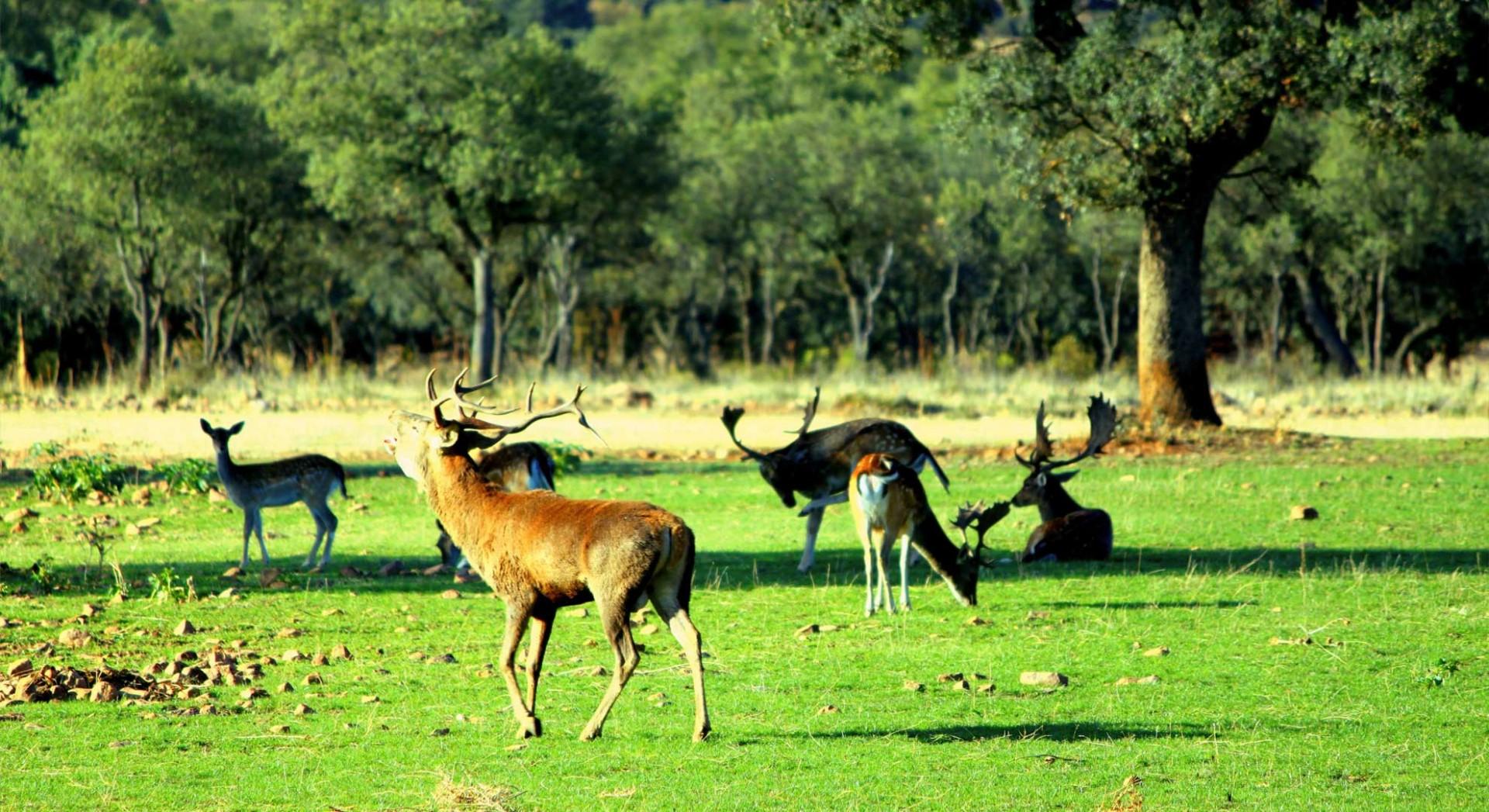 Animales en libertad en la finca El Valle de Abajo