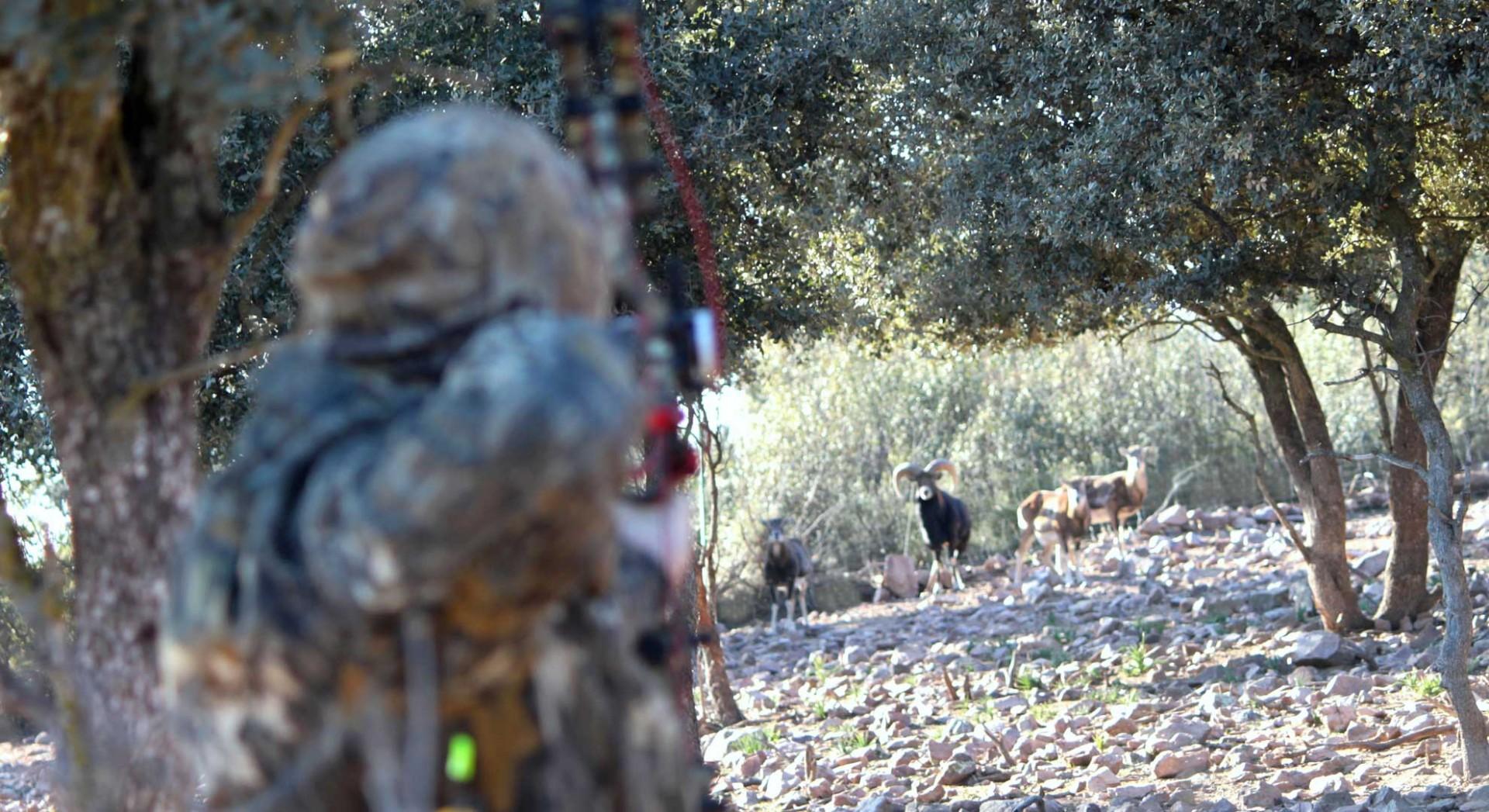 caza con arco en la finca El Valle de Abajo